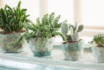 UNIQUE & PIC - COLLECTION / Collection de cactus et succulentes dans des oeuvres en céramiques imaginées par l'artistes Emile Degorce-Dumas