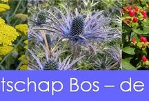 G-Fresh grower Maarschap Bos-de Vries / Our nursery was founded in 1979 by Nenne Bos - de Vries. The first crops consisted of a very wide range of cut flowers, Eryngium and Achillea. Over time the company grew into a farm of more than 2.3 hectors, and in 2007 daughter Adrie Klaasse Bos - Bos joined the company.