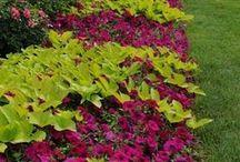 Stunning Annuals