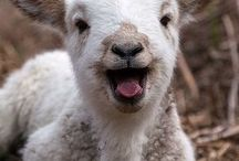 goats <333