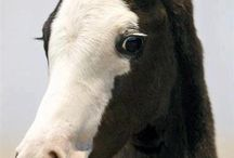 photo.  cheval