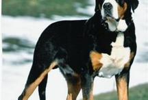 Canine Cuties!!