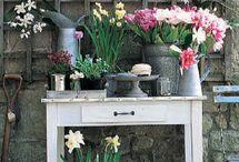Spring Gardening. / The promise of springtime in the garden.