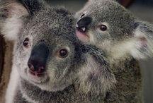 Koalalala♡