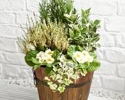 Flowers, Plants, etc