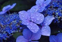 ✿⊱  ...Blue  colors....✿⊱