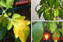 Péče o rostlinky