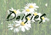 Daisies / www.indiegogo.com/daisies