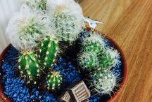 Cactus (i did)