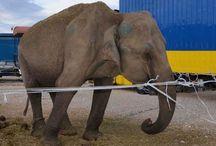 Défense des animaux