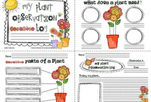 Kindergarten Plants And Flowers