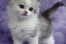 findik kedi