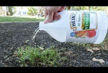 Garden tips and tricks