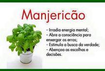 Plantas e ervas medicinais