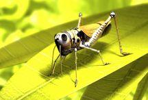 insects, Arachnida, arthropods // насекомые, арахниды, членистоногие / insects, Arachnida, arthropods // насекомые, арахниды, членистоногие