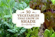 Shade veggies