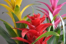 Brilliant Bromeliads