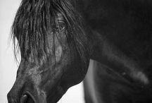 Horses A way of life