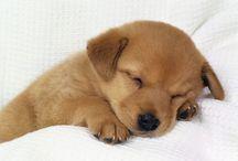 petit chien qui dort