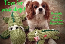 Cavallier King Charles Spaniel / by Pam Smith