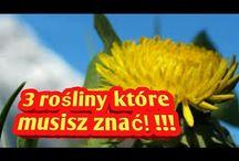Zioła-Sabastian Szaman