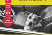 DAS Tips for Pet Owners / by Dallas Animal Services