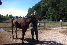 Osteopatia per cavalli / La prima seduta della vecchia Lucy