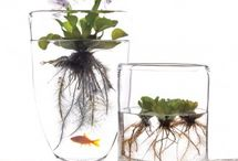 Eco-home / Green-Home, aquaterarium, neo-natural