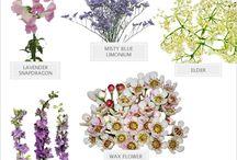 Kwiaty // Flowers