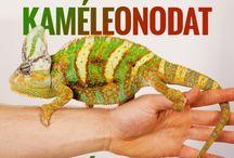 Kaméleon <3