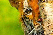 Animals Grrrr! / by Tammy Upchurch