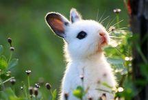 Toelhinhos / Fotos de coelhinhos!