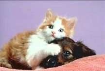 eläinvideot