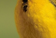 Aves / by Manolita Garcia Fernandez