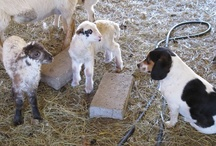 Farmgirl Fare - Beagle Bert / by Farmgirl Fare