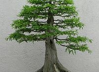 BONSAI and landscape / by ZipMinis Blog