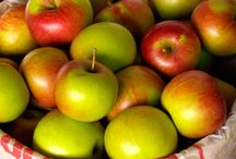 Apples ❦ / Apple Facts and Apple Recipes / by CooksInfo.com