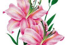 Laminas Y Trabajos Con Flores