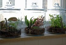 Gardens for Small Spaces / Terrariums and such / by Kim Martyn