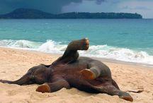 Elephants I love!! / by Michelle Atnip