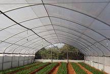 Tunele foliowe, ogrodowe i ogrodnicze / Tunele foliowe, ogrodowe i ogrodnicze www.krosagro.com
