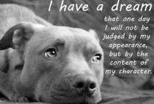 I love animals :) / by Diana Reyes