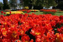 2014 Fête de la Tulipe / Un parc fleuri, des tulipes à profusion et du soleil en guise d'avant goût d'un été radieux.