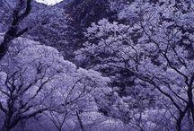Visit Nagasaki