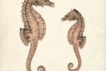 sea horse illustrations