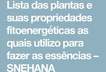 Plant as medicinais