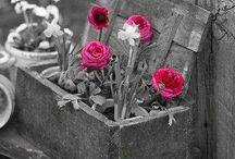Obrazy kvety