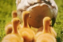 Animals-Farm / by Kelly Byrnes