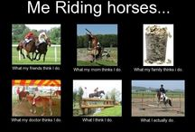 Equestrian and funny moments