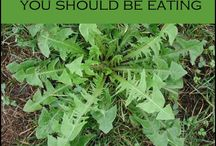 Veeds eating Dandelion  etc